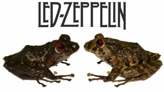 New Species Of Frog Found In Ecuador Named After LED ZEPPELIN